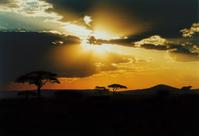 Serengeti Sunset 1