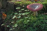 Mushroom in shamrock