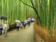 Bamboo grove 03