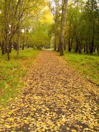 Autumn's road