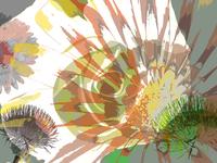 sr flower 0101 1