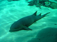 London Aquarium shark 6