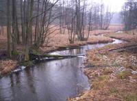 River Swamp