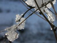 heavy crisp - frost