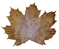 paper_leaf