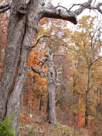 Mount Nebo trees