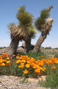 Spring in Desert 3