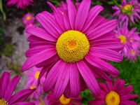 Beautiful Garden 5