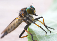 Bug eyes 2