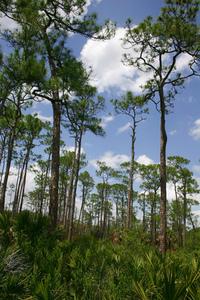 Everglades Forest