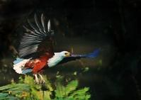 Fish Eagle Hunting 5