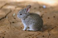 teeny weeny bunny