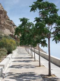 Aligned trees 2