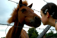 The horsewhisperer