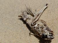 Grasshopper Carcass