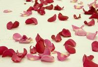 所以秦浩轩一开口,吞下这9天的红花瓣,花瓣进肚后,立刻动员灵力开始消化花瓣。