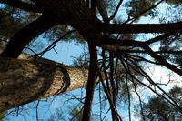 sky thru tree
