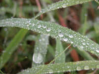 after rain macro