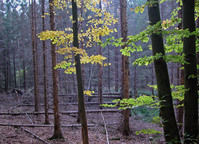 Autumn duotone