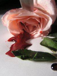 bleeding roses 9