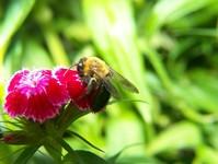 Macro: Bee 2