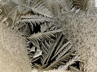Ice Garden 9