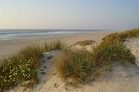 Tocha beach 1