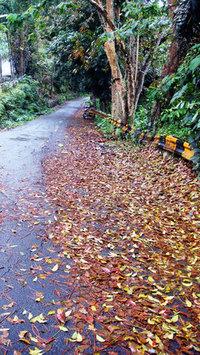 Fallen Leaves 2