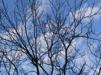 wood sky blue