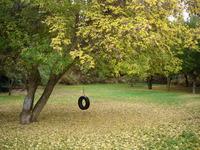 Tire Swing in Autumn 2