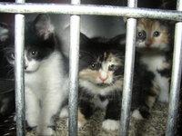 Kittens in Jail 1