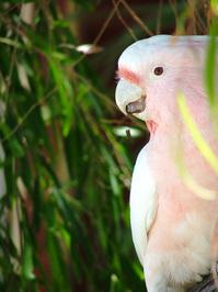 aussie birds 2