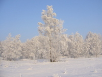 Wild Winter 5