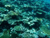 House Reef 3