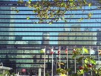 UN reflections