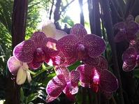 Moody Garden Orchids 6