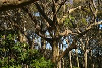 lake brou trees 46