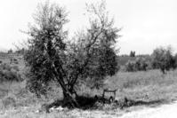 Siena0 4