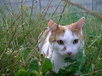 Kat in het veld