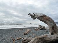 Driftwood at Rialto beach