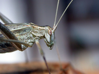 Insecte 28