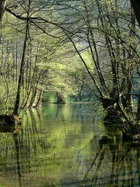 Spring of river Bosnia