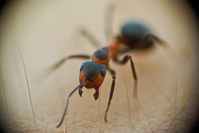 macro insects 7