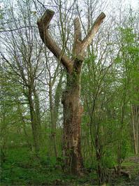 misc_tree 2
