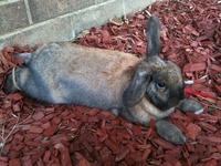 Binxy bunny