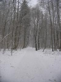 winterscape 4