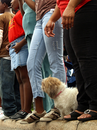 Dog watches parade