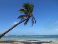 Palm on the Beach