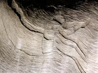 weather trees grain texture