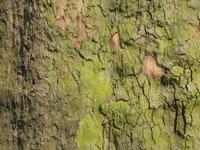 bark of a tree 4